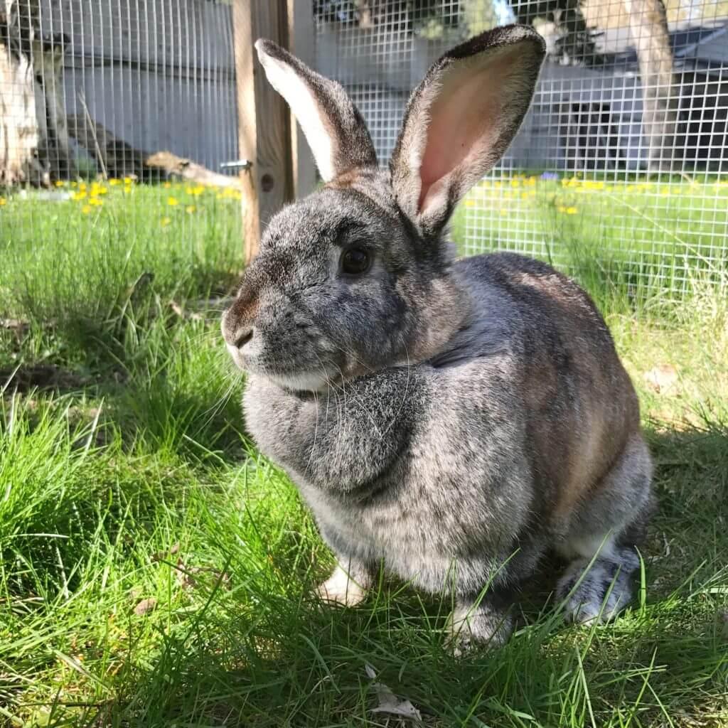 Cookie Doe the Rescue Rabbit
